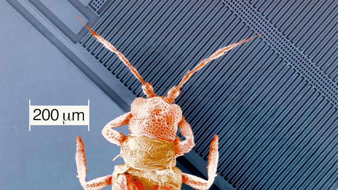 Bár kisebbek egy atkánál, a modern mikromechanikai érzékelőkben még mozgó alkatrészek is találhatók. Némely mozgó alkatrész átmérője egyetlen emberi hajszálnál is kisebb. Képünk 2001-ben készült